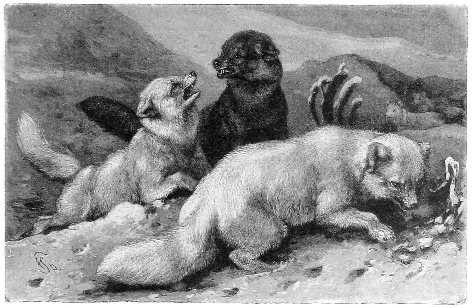 Die Gartenlaube (1886)