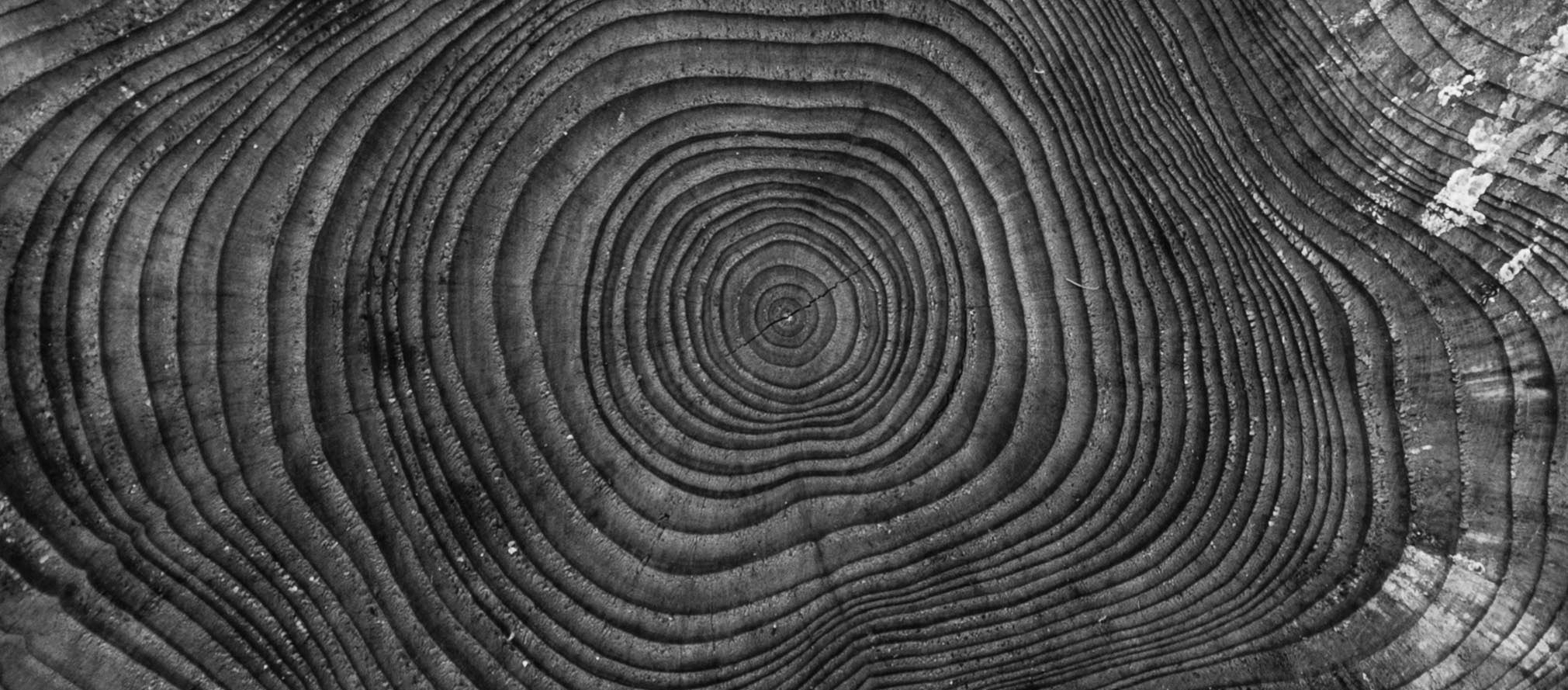 tree-nature-abstract-black-and-white-wood-photography-844367-pxhere.com