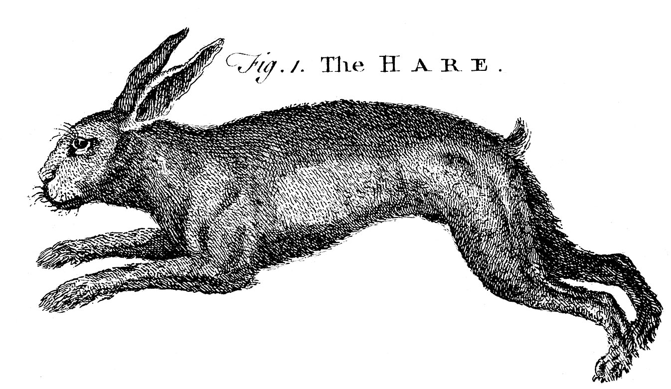 Fig. 1. The hare