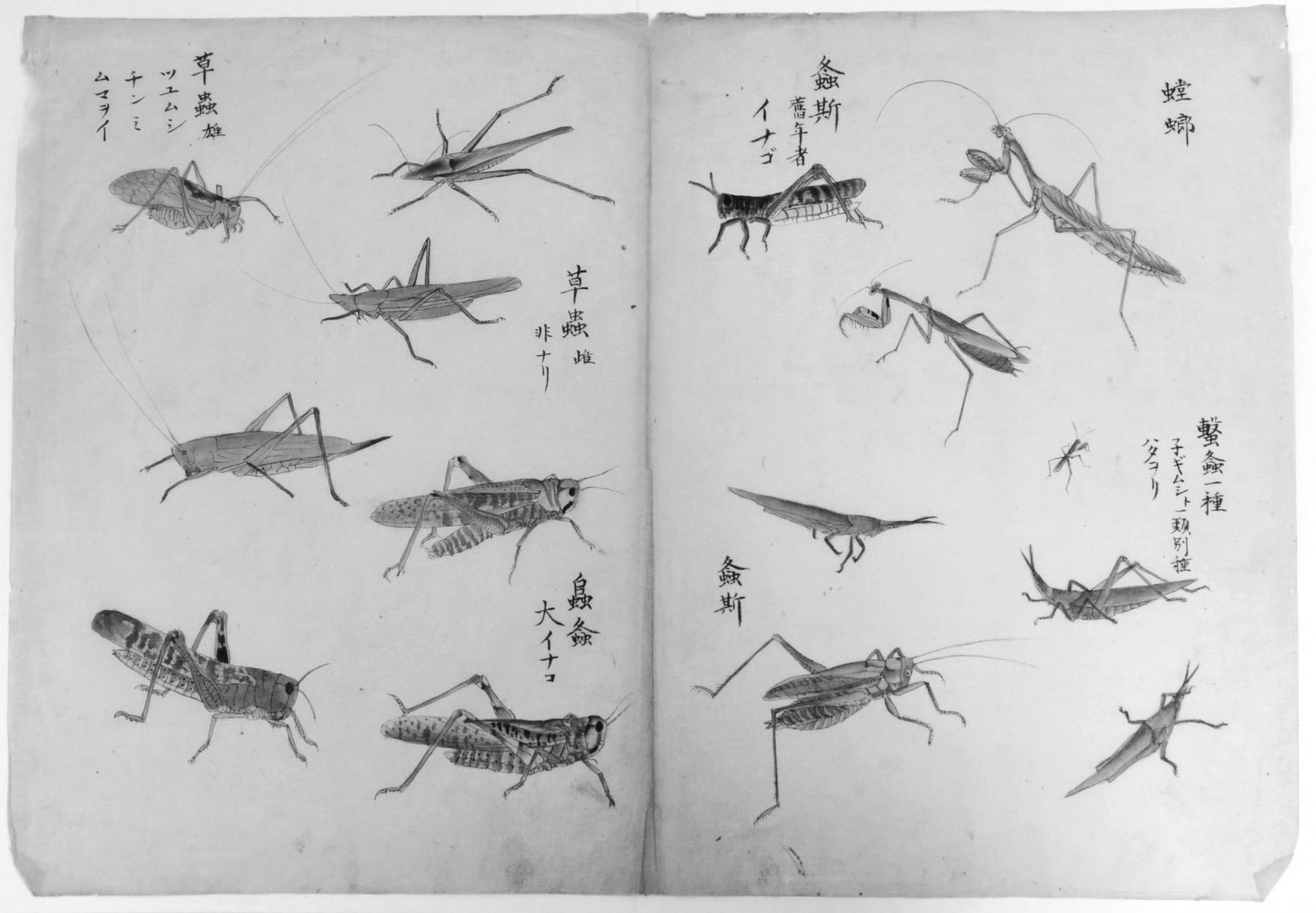 Traducciones: Poemas de Chika Sagawa [versiones de Daniela Morano]