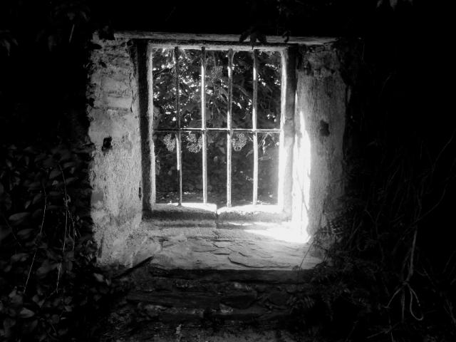 Imagen destacada Un árbol de luz íntima de Tomás Cohen